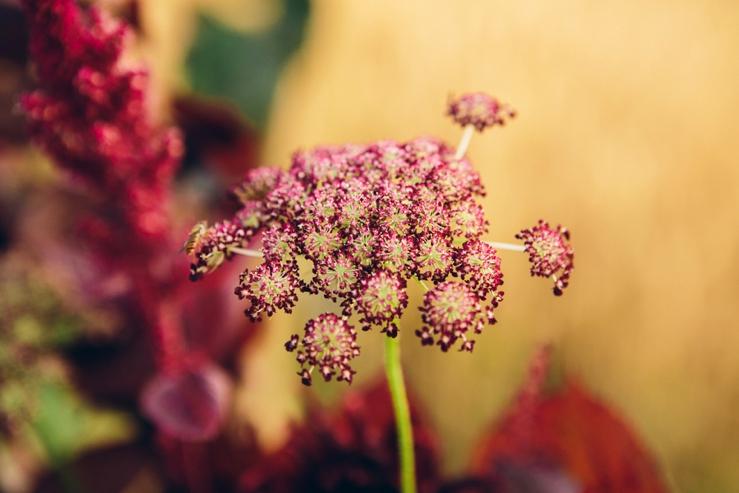 svadba, svadobna inspiracia, slovensko, marsala vervain dalia kvety_0006