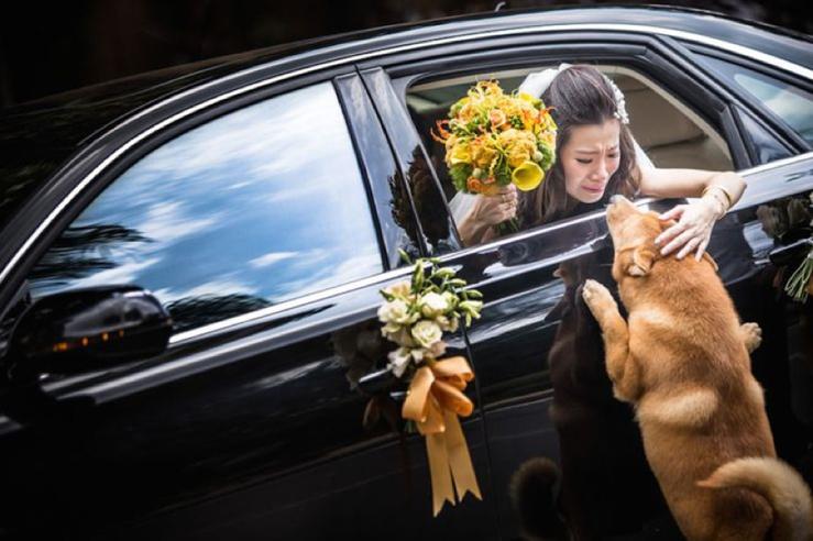 Perfect Day, svadba, slovensko, svadobna inspiracia, host so styrmi nohami_0011