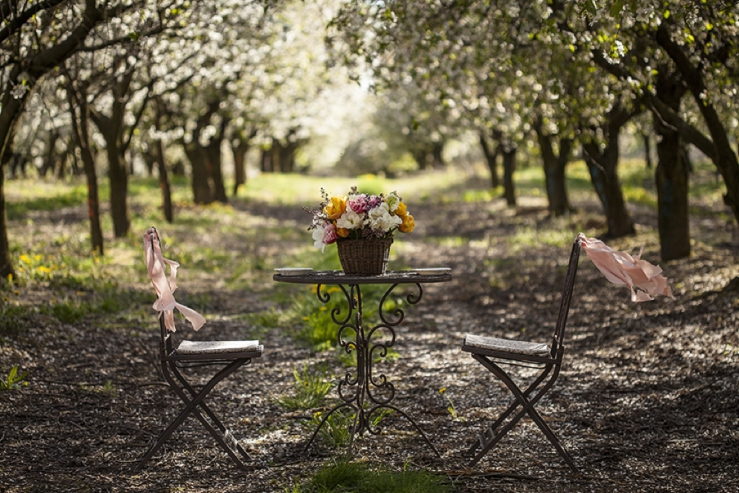 perfect day, svadba, slovensko, svadobna inspiracia, svadbolina, kamarian v sade_0001